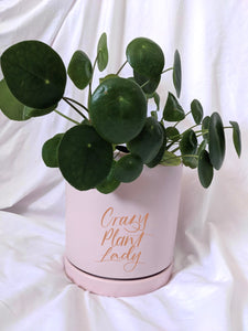 'Keep Growing' Large - Personalised Plant Pot with Indoor Plant