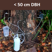 Treating your tree for Polyphagous Shot Hole Borer (PSHB) infestation