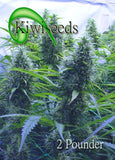 2 Pounder Marijuana Seeds