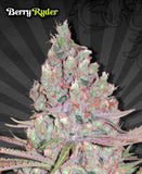 Berry Ryder Automatic Marijuana Seeds