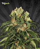 Hijack Automatic Cannabis Seeds