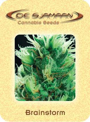 Brainstorm Marjuana Seeds