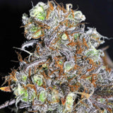CBD Critical Mass Feminized Cannabis Seeds