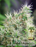 Daddy's Girl Marijuana Seeds