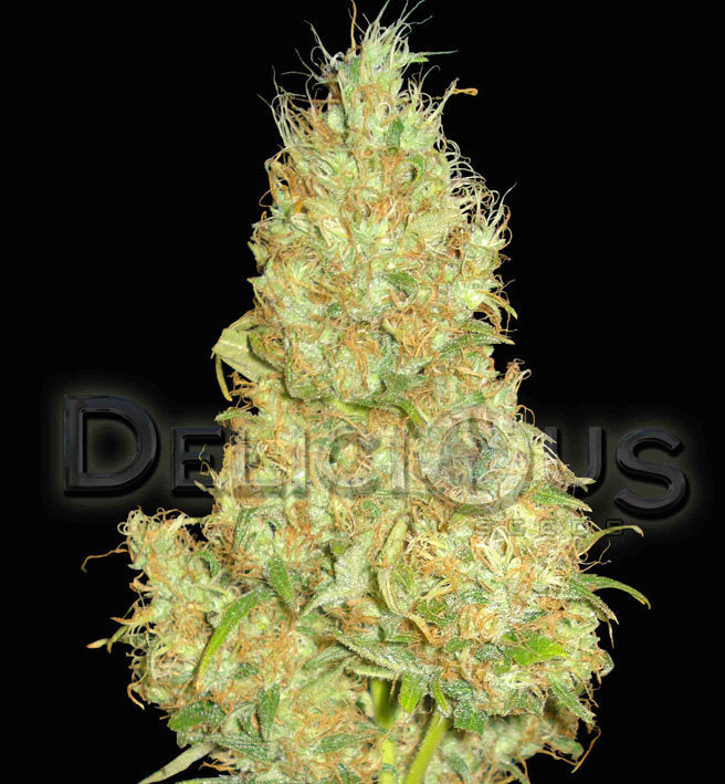 Fruity Chronic Juice Marijuana Seeds