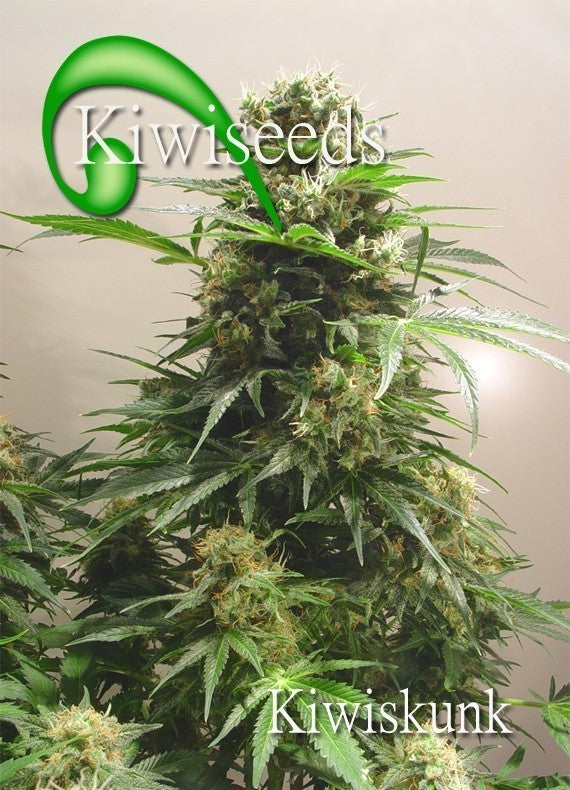 Kiwiskunk Cannabis Seeds