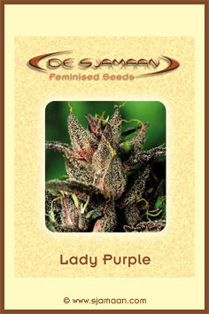 Lady Purple Cannabis Seeds