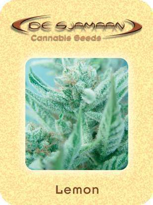 Lemon Cannabis Seeds