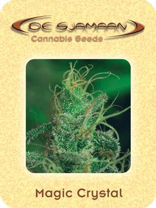 Magic Crystal Marijuana Seeds