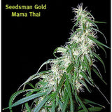 Mama Thai Marijuana Seeds