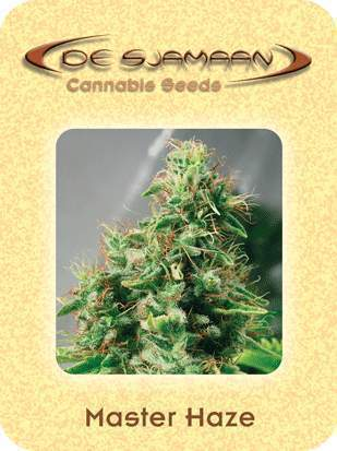 Master Haze Marijuana Seeds