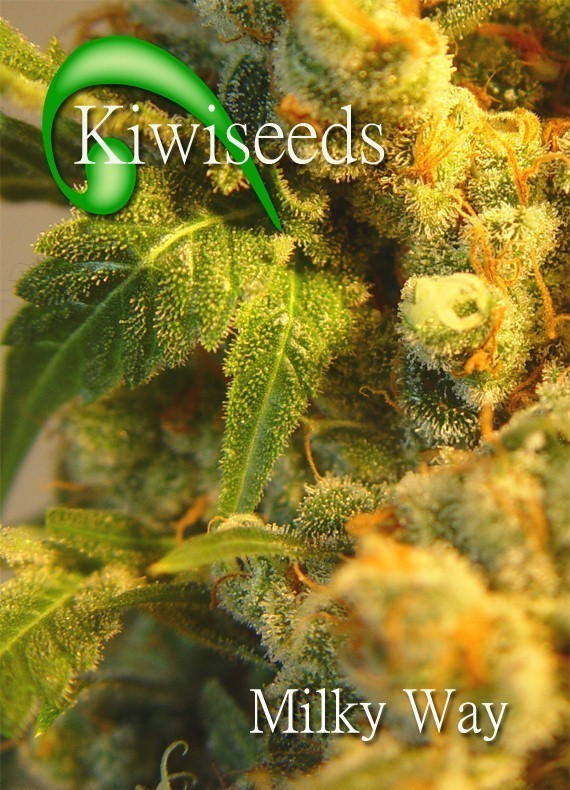 Milky Way Marijuana Seeds