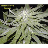 Narkush Marijuana Seeds