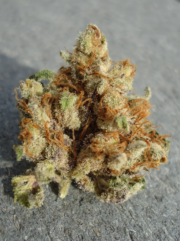 Fire Alien Urkle