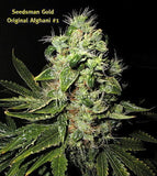 Original Afghani #1 Marijuana Seeds