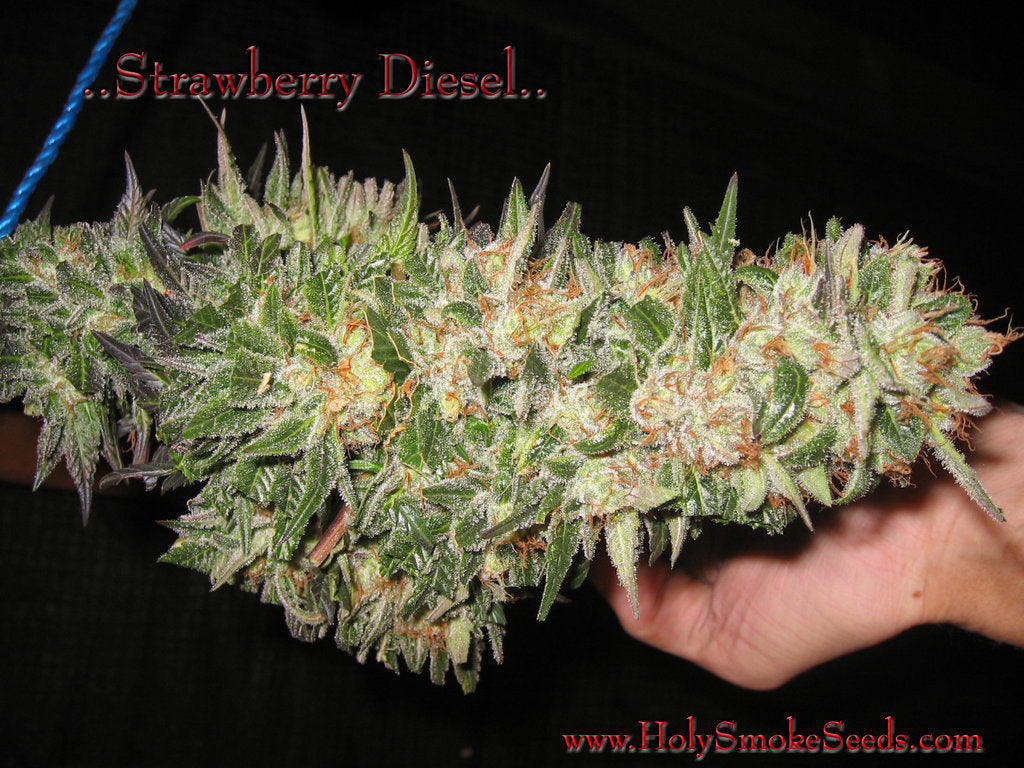 Strawberry Diesel