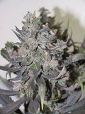 Auto Blue Mystic Marijuana Seeds