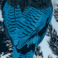 The Beautiful Pacific Northwest - Steller's Jay Print - 36x11.75
