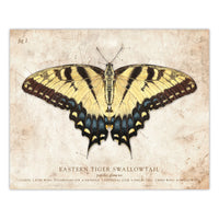 Eastern Tiger Swallowtail Butterfly - Scientific Illustration Print - 8x10
