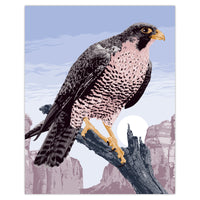 Peregrine Falcon - Illustration Print - 16x20