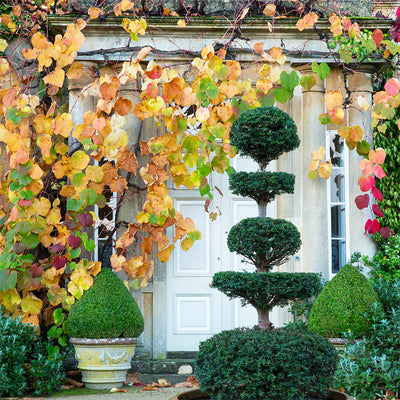 Autumn Garden Tips