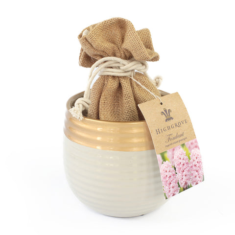 Hyacinth Fondant Large Indoor Growing Kit