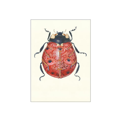'Ladybird' Greeting Card