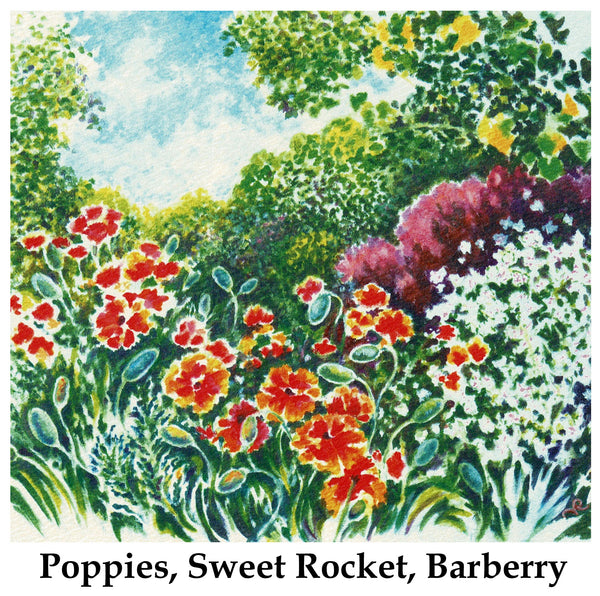 Poppies, Sweet Rocket, Barberry