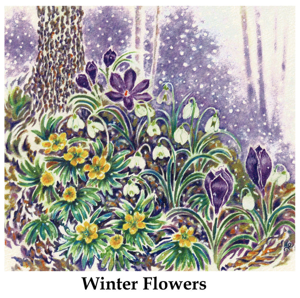 Winter Flowers