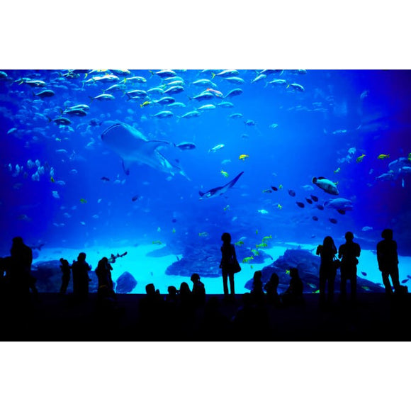 Sentosa S.E.A. Aquarium Admission in Singapore with Optional Hotel Transport