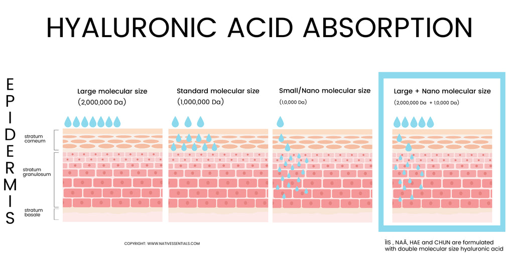 Native Essentials Hyaluronic acid absorption chart