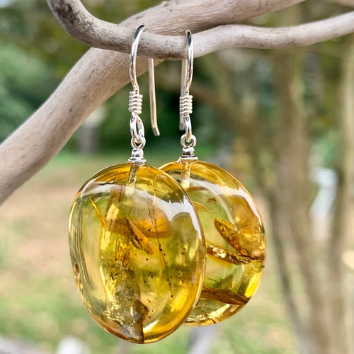 Baltic Amber Disc Earrings, Rowena Watson Designs