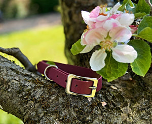 Biothane Waterproof Collar - Wine Red