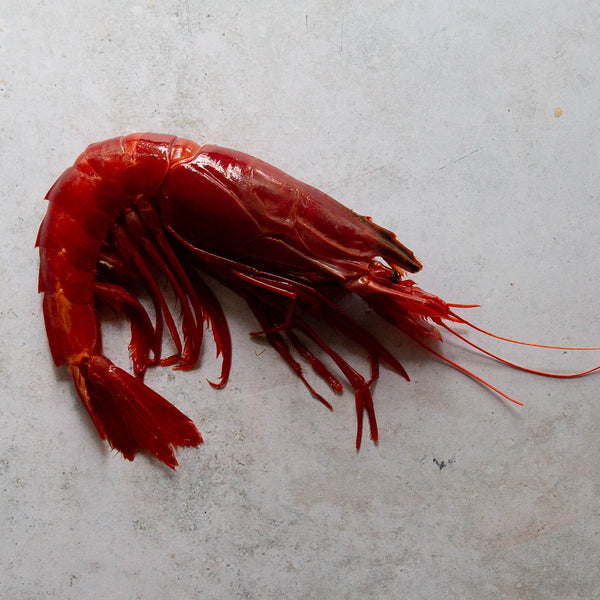 Carabineros Red Prawns | FINE & WILD UK