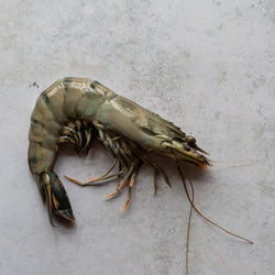 Black Tiger Prawn | FINE & WILD UK