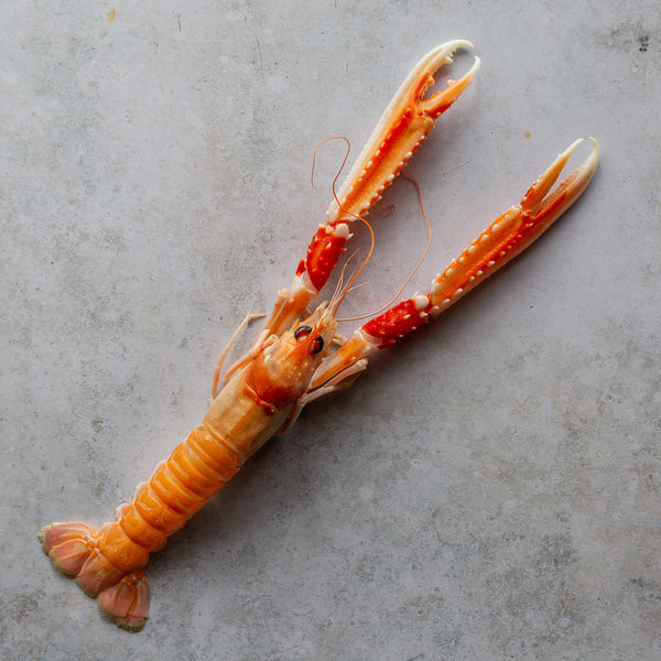Wild Scottish Langoustines