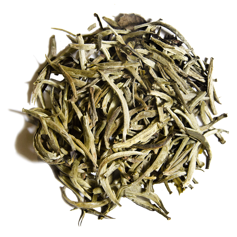 TGL Co. White Bud Yin Zhen White Tea