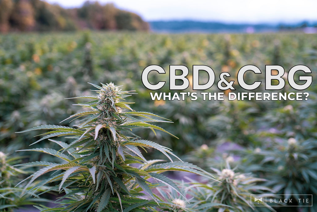 CBD and CBG:  What's the difference?