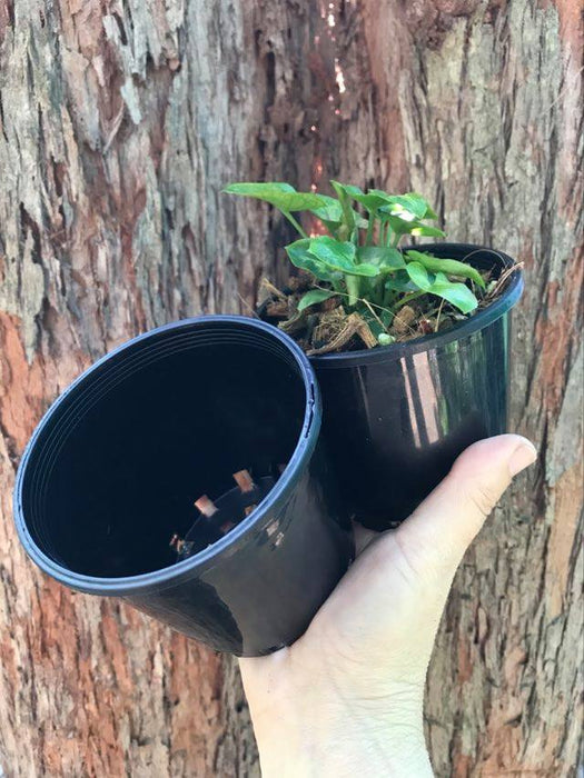 Baby size 100ml Black Nursery Pots 4 for $2
