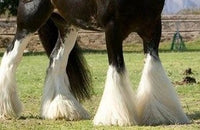 picture of horses feather