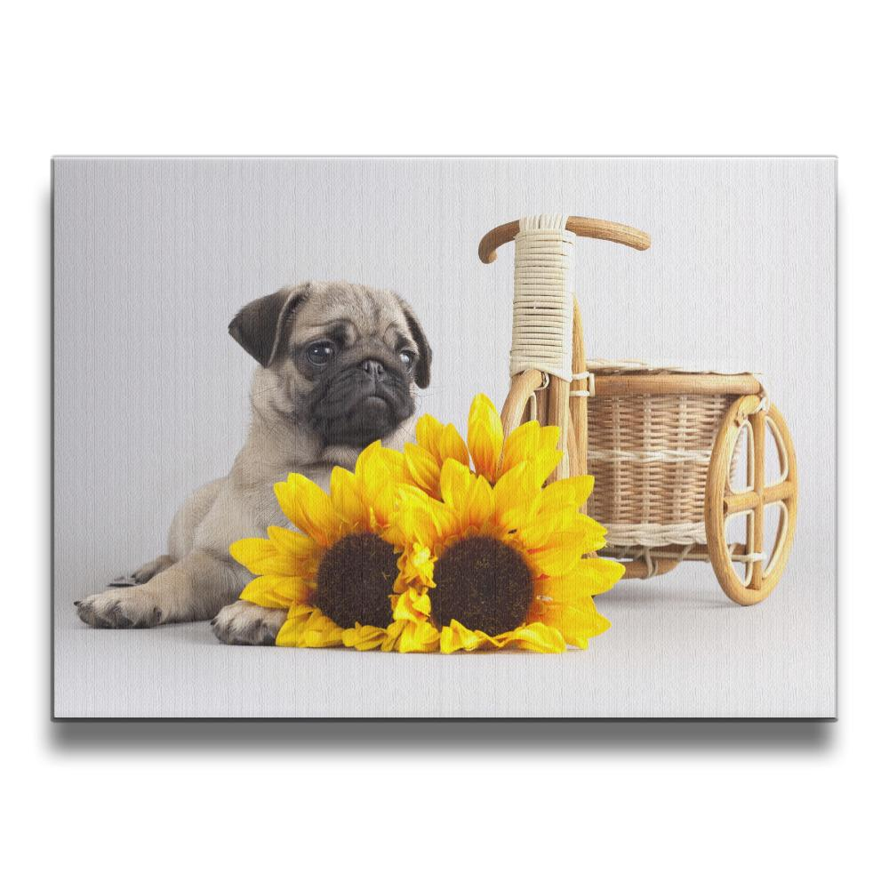 Cute Pug Frameless Art Picture Wall Frames Wooden Artwork 16*20 Inches