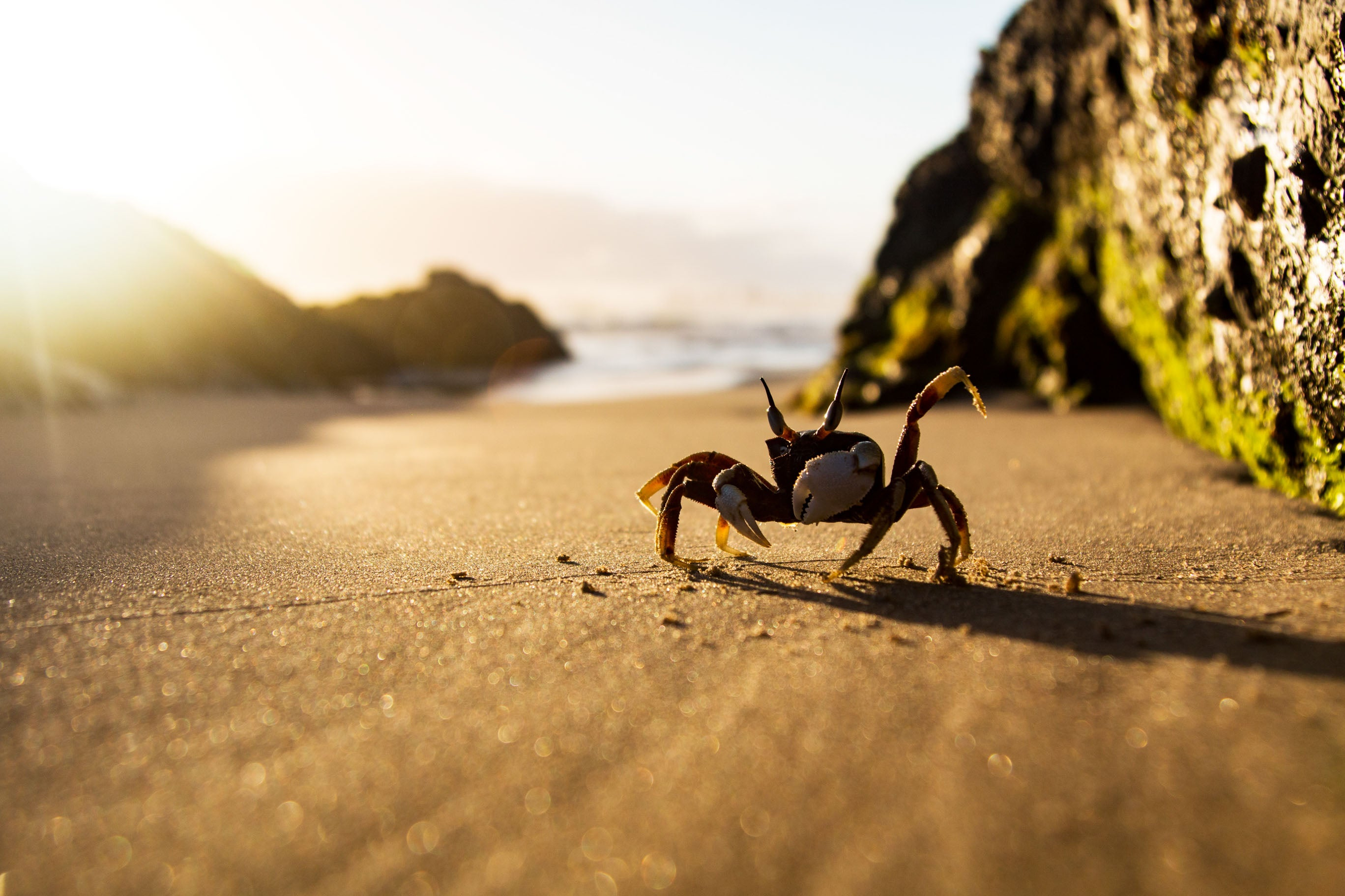A Crabby Good Morning