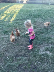 Giving the chickens some exercise!