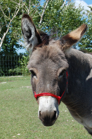Marine Line Rope Halter for Average Donkey