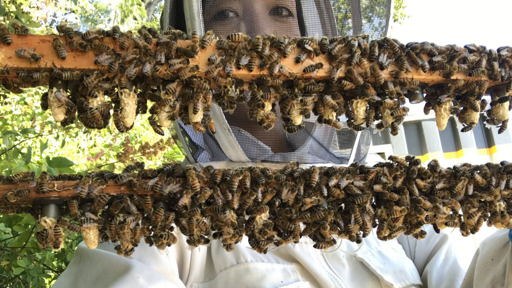 Shedding Light on the Secret Reproductive Lives of Honey Bees - Rated PG 13