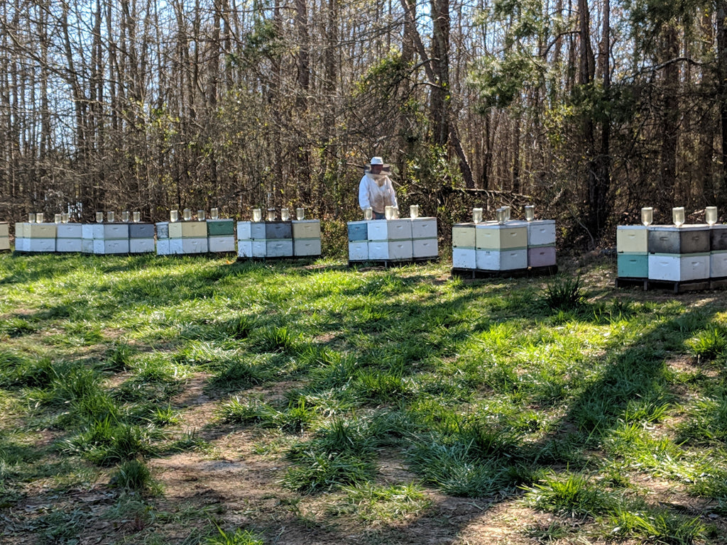 Getting Started: Interview with a Beekeeper