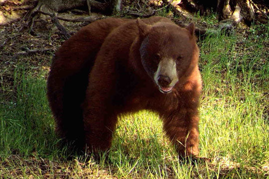 Trail Safety for Bear Encounters and Attacks
