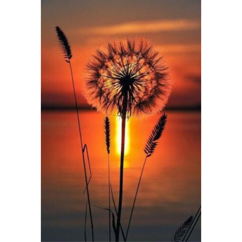 Full Drill - 5D DIY Diamond Painting Kits Sunset Scene Beautiful Dandelion