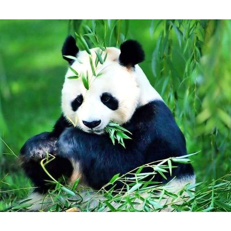 Hot Sale Cute Animal Panda Picture Full Drill - 5D Diy Diamond Painting Kits VM7854 - NEEDLEWORK KITS