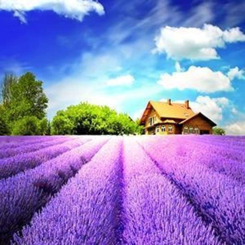 New Hot Sale Lavender Fields Picture Full Drill - 5D Diamond Painting Kits VM8693 - NEEDLEWORK KITS